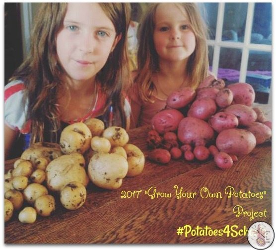 Results Are In! Grow Your Own Potatoes Project