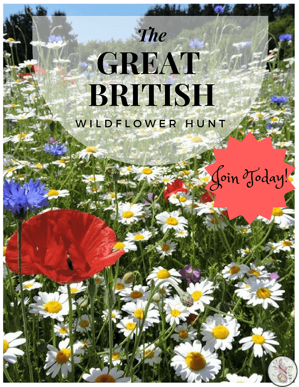 Great British Wildflower Hunt