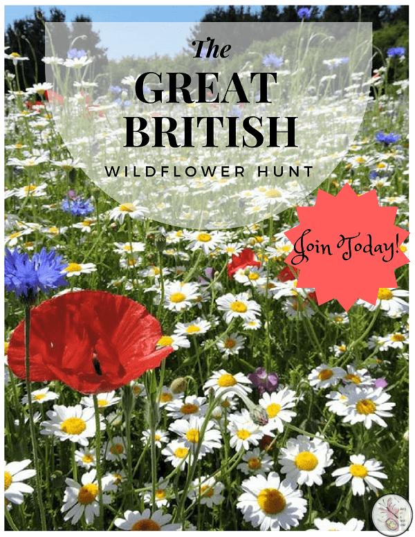 Great British Wildflower Hunt