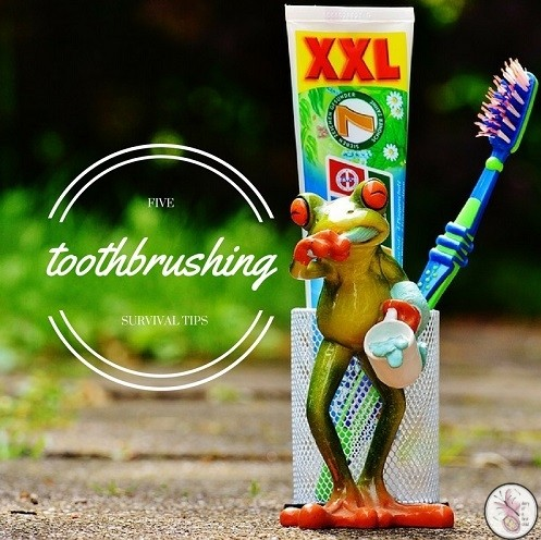 toothbrush survival